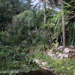 Si vous voulez faire un jardin de style exotique …