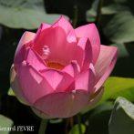 Le parc floral de la Court d'Aron ou comment faire un jardin de style tropical avec des plantes rustiques …