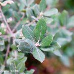 Pour organiser votre jardin, pensez au chêne vert …