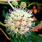 Une jolie plante d'intérieur en pleine terre !