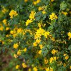 Préparez le printemps avec une plante persistante et très florifère