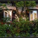 Un balcon planté de couleurs et de parfums