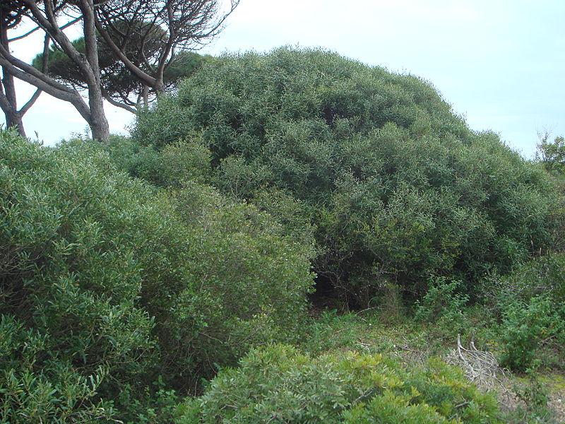 Quelques Filarias dans la nature par Xemenendura