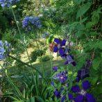 Savez-vous comment nourrir vos plantes pour qu'elles fassent de belles fleurs ?