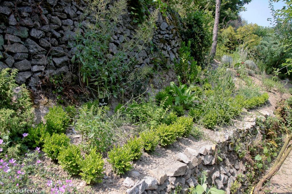 Le jardin des simples et les plantes digestives entourées de buis