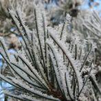 Et si le froid et le gel arrivent sur nos plantes …